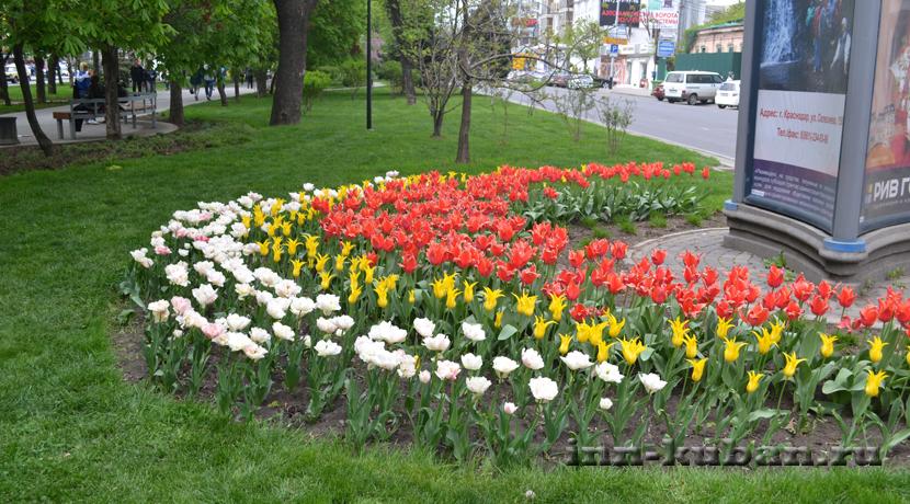цветы в Краснодаре